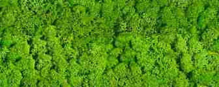 ArtMoss Nature Lime