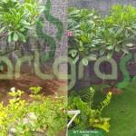Before-After-Artgrass-Taman-Belakang-Gersang-Rumput-Sintetis