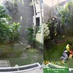 Rumput-Sintetis-ArtGrass-Taman-Belakang-Rimbun-Rumah