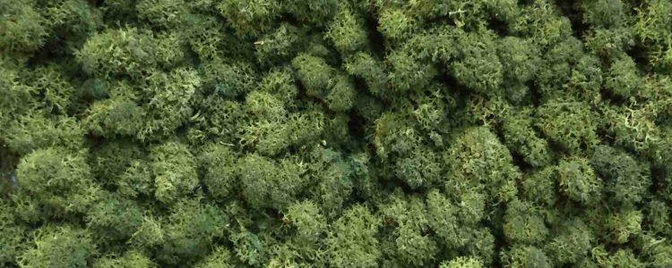 ArtMoss Nature Olive