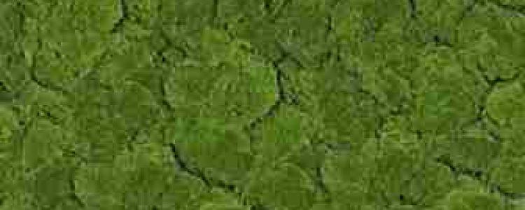 ArtMoss Fabric Form