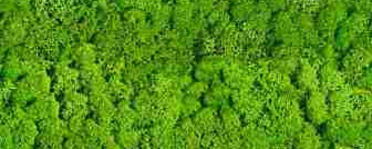 ArtMoss Nature Lime