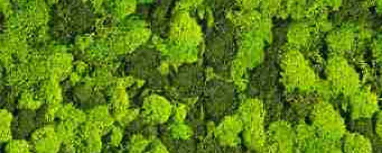 ArtMoss Nature Mix